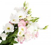 Beautiful eustoma flowers, isolated on white