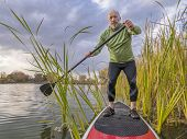senior paddler enjoying stand up paddling on lake among cattail