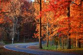 Winding road in autumn trees