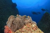 Anemone, clownfish and scuba divers