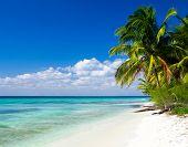 Caribbean Beach and Palm tree