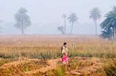 Indian Rural Woman Standing In The Mist