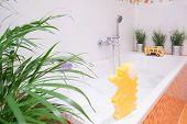 stock photo of bath sponge  - Bath toys for toddler on the bath - JPG