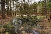 picture of marshes  - A frozen marsh pond on a Winters morning at Mogshade Hill - JPG