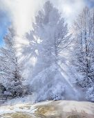picture of mammoth  - Snow Covered Tree with Sunbeams in Steam from Mammoth Hot Springs in Yellowstone - JPG