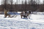pic of sleigh ride  - man in fur clothes rides in a sleigh pulled by two reindeer - JPG