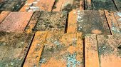 foto of lichenes  - Old dirty orange roof tiles with moss and lichen - JPG