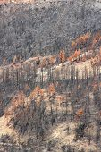 foto of canary  - Forest destroyed in fire disaster in Tenerife Canary Islands Spain - JPG