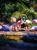 pic of zoo  - The pink flamingo in the zoo thailand