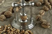 foto of nutcracker  - nutcracker and pile of walnuts in shell in soft diffused light - JPG