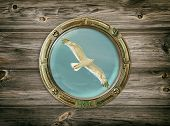 picture of mew  - View Of The Seagull Through A Porthole - JPG