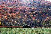 Fall Foliage 20