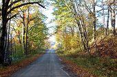 Fall Foliage 0027