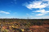 European Langs Belorussian Autumn Big Swamp Near Minsk Nice Landscape