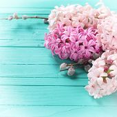 stock photo of willow  - Fresh hyacinths and willow branches on turquoise wooden background - JPG