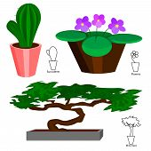 pic of bonsai  - Set of colored house plants in pots cactus - JPG