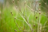 pic of dry grass  - Nature background - JPG