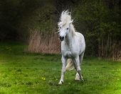 pic of stallion  - An excited stallion stands in the middle of the meadow - JPG