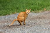 foto of feces  - Yellow cat is the feces on country road - JPG