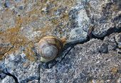 image of crawling  - Lone snail crawling on old cracked concrete - JPG