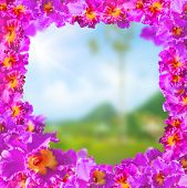 stock photo of debonair  - Frame of Beautiful Pink Orchids on Soft and blurred background - JPG