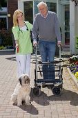 pic of dog-walker  - Smiling Blond Nurse Holding onto Arm of Senior Man Helping Man with Walker Walk Dog on Leash Outdoors in front of Retirement Building on Sunny Day - JPG