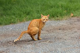 pic of feces  - Yellow cat is the feces on country road - JPG