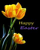 Happy Easter Tulips Card Or Easily Remove Text