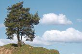 Lone Tree.
