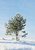 Tree in snow, winter
