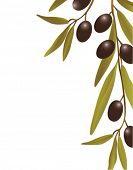 stock photo of olive trees  - Olives - JPG