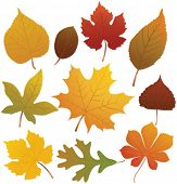 foto of fall leaves  - Autumn leaves - JPG