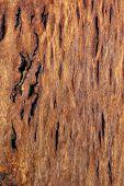 Wood Texture: Figured Tasmanian Blackwood