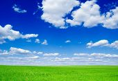 Green field and fluffy clouds. poster