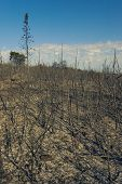 Scorched Bushes, Grass And Trees After Fire In Croatia poster