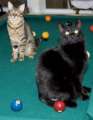 Two Cats On Pool Table
