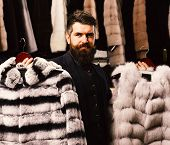 Man With Beard And Mustache In Fur Shop. Shop Assistant Holds Grey Sable And Striped Chinchilla Fur  poster