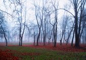 Autumn Nature - Foggy Autumn View Of Autumn Park In Dense Fog. Autumn Foggy Landscape View. Autumn F poster