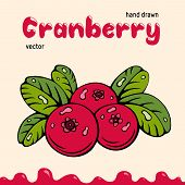 Cranberry Vector Illustration, Berries Images. Doodle Cranberry Vector Illustration In Red And Green poster