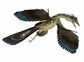 Archaeopteryx Reptile In Flight 3d Illustration - Archaeopteryx Was A Carnivorous Pterosaur Reptile  poster