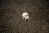 HUMAN SKULL. Human Skull washes ashore on a beach. Human Skull buried in the sand. Ocean with human  poster