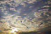 Kite in den Himmel