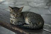 On A Wooden Bench Lies A Homeless Sad Kitten. A Grey, Striped Kitten Lies On A Bench. poster