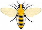 Honey Bee, vector illustration