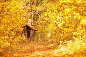 Beautiful Bright Autumn Background. Yellow Autumn Trees In Forest. Autumn Leaves Fall From Branches  poster