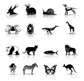 Selected animals symbols/icons. Vector Illustration.