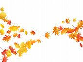 Flying Oak And Maple Leaf Abstract Background Seasonal Vector Illustration. Autumn Leaves Falling Gr poster