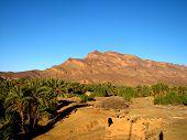 Постер, плакат: Оазис с пальмовых деревьев в горах в Марокко