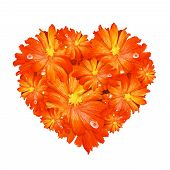 stock photo of tuberose  - A Beautiful Heart Shape of Orange Gerbera Daisy on A White Background - JPG