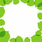 Quadro de folhas verdes em fundo branco